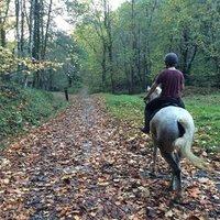 skype equitación
